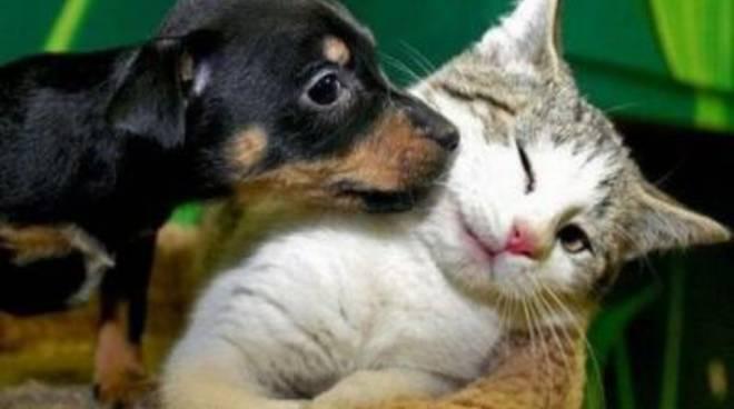 """""""Appuntamento con una nuovaraccolta di cibo per cani e gatti"""""""