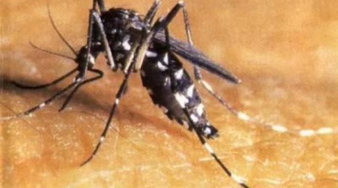 Zanzara tigre, in corso il secondo ciclo di interventi<br />