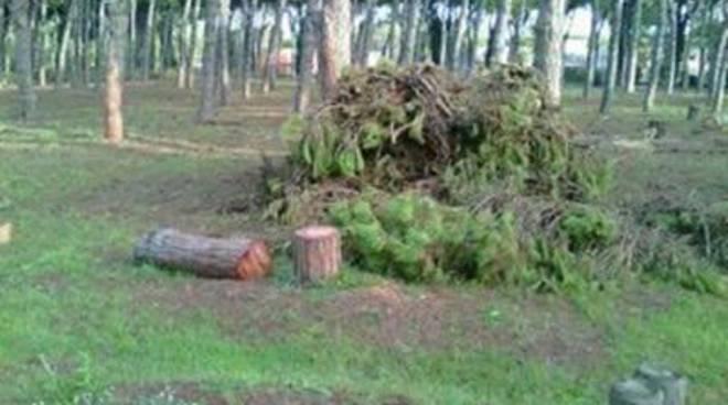 Sit in contro gli abbattimenti di alberi nel X municipio<br />