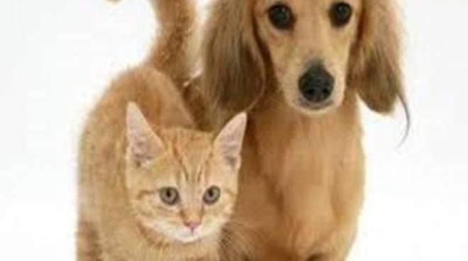 Campagna sterilizzazione animali randagi: quando?