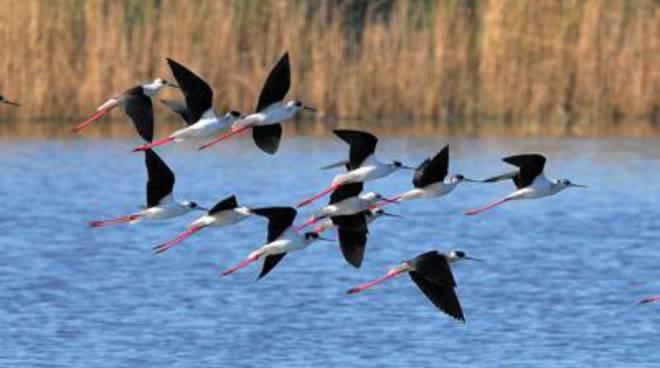 Domenica 26 aprile è la Festa delle oasi e delle riserve Lipu<br />