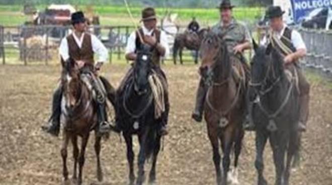 Il cavallo: vero protagonista della Festa della Merca
