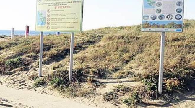 Salvaguardia delle dune di Passoscuro, apprezzamento dal Wwf
