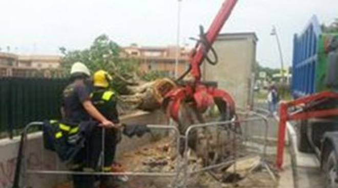 Il forte vento fa cadere un albero in Via Giuseppe Moschini