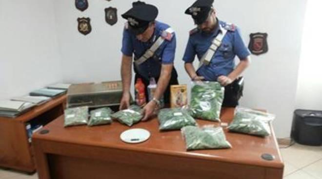 Coltivavano marijuana in casa