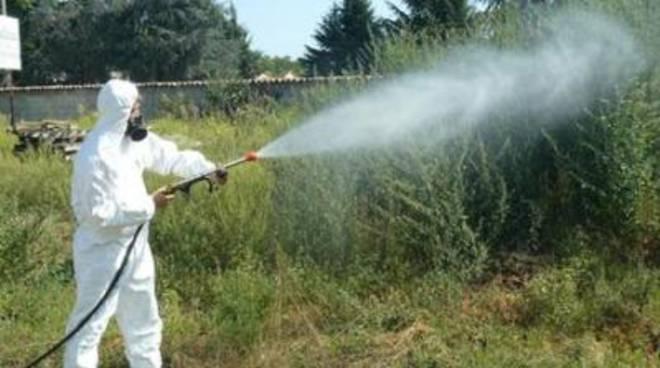 Disinfestazioni adulticida contro la zanzara ed altri insetti alati tipici stagionali