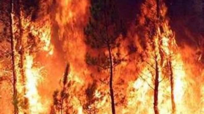 Incendio pineta, in Commissione Ambiente si apre lo scontro sulle responsabilità