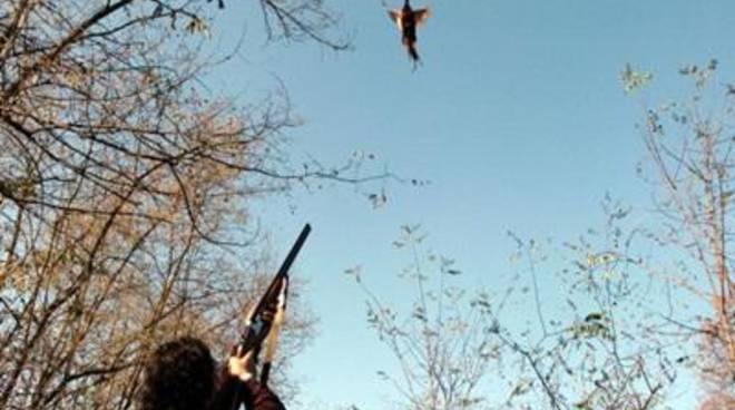 """Sel Litorale Romano: """"Preapertura della caccia, una forma di violenza contro la natura"""""""