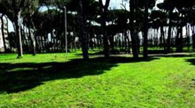 """Verde pubblico, Placidi: """"Ripristino e decoro aree verdi periferiche"""""""