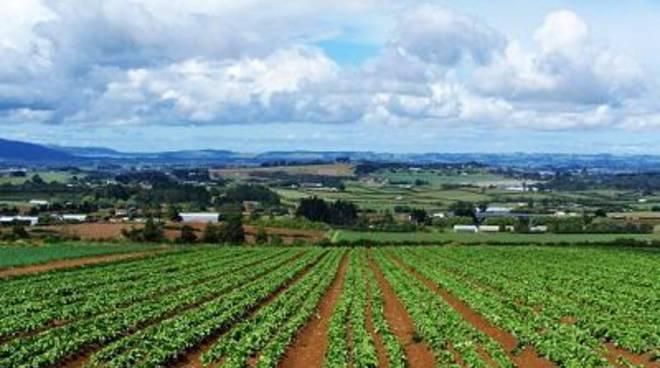 Agricoltura, Ricci: ''Fondi per lo sviluppo della multifunzionalità''