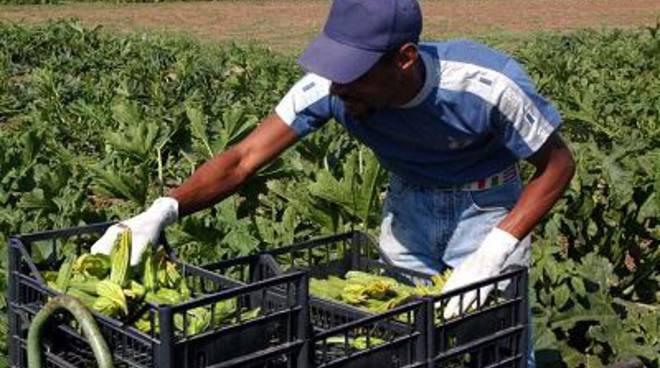 Approvato il Regolamento sulla multifunzionalità per l'innovazione nel settore agricolo