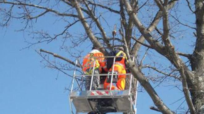 Potatura e pulizia del verde pubblico: al via i lavori in diversi punti della città