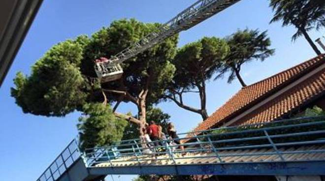 Ramo di un pino si spezza bloccando le scale della stazione di Ostia Antica