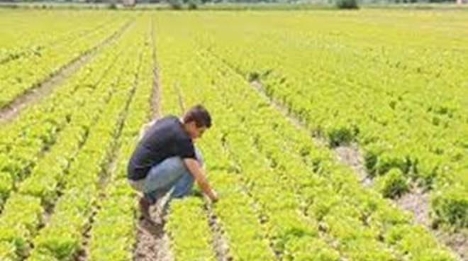 """Agricoltura, Agea: """"Calcolati i titoli provvisori della Pac"""""""