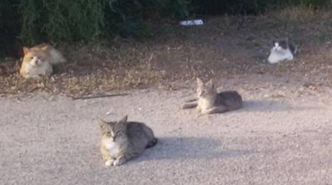 Emergenza gatti e cani della pineta di via Mar Rosso