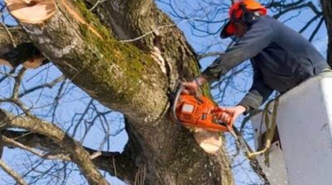 Tagliati gli alberi malati dei giardini centrali del parco pubblico in via Odescalchi
