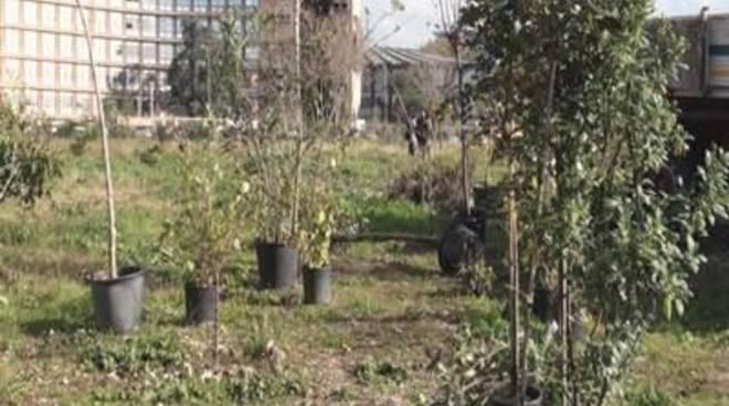 """Avenali: """"Festa dell'albero per fermare i mutamenti climatici"""""""