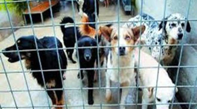 """Canili, Santori: """"Una società di capitali non può garantire il benessere dei cani"""""""