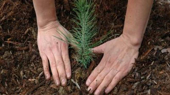 """Cini: """"Il Comune aderisce alla giornata nazionale degli alberi"""""""
