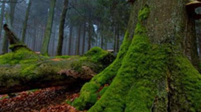 Macchiagrande: quando la natura si fa presepe