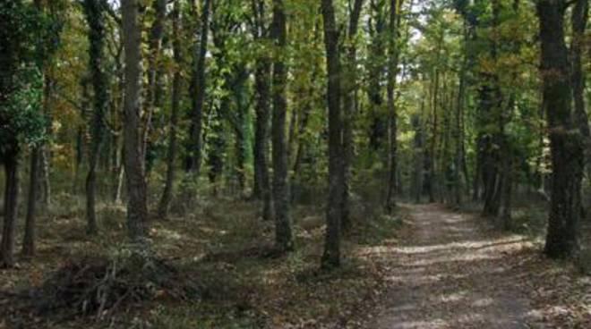 Progetto Life: a tutela del bosco di Palo Laziale