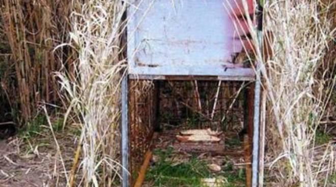 Bracconaggio: gabbie scoperte in piena Riserva del Litorale Romano