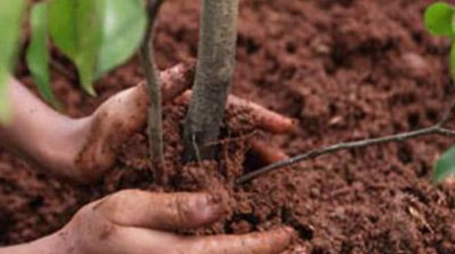 """Una Città sempre più verde, Mattias: """"In arrivo 150 nuove querce"""""""