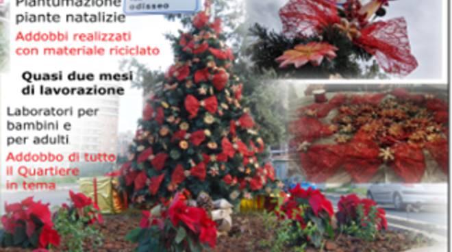 E' quello del Querceto l'albero di Natale più bello