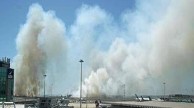 Pineta di Focene, il M5S chiede il ripristino dopo l'incendio di luglio