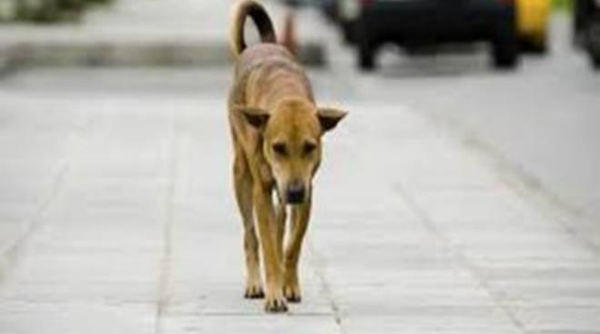 Sos animali: attivo h24 il numero unico della Protezione civile<br />
