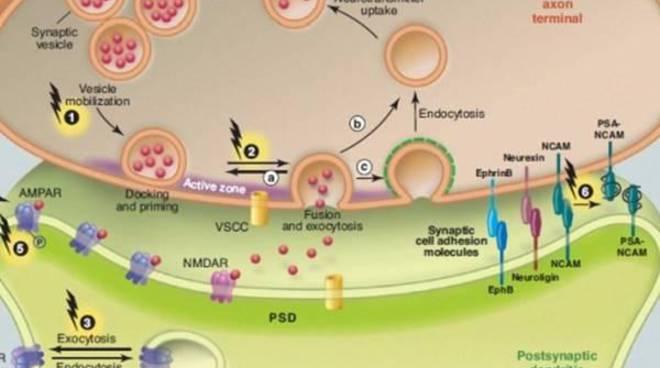 Terapia biologica dei tumori. Un convegno ad Anguillara