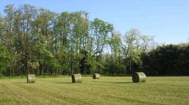 Agroalimentare: le eccellenze del Lazio al Biofach di Norimberga
