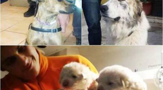 Cani smarriti: la Protezione civile in azione