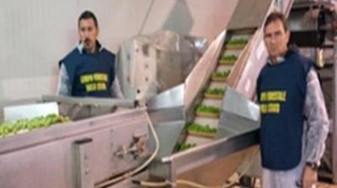 Comando provinciale: olive da tavola colorate con solfato di rame