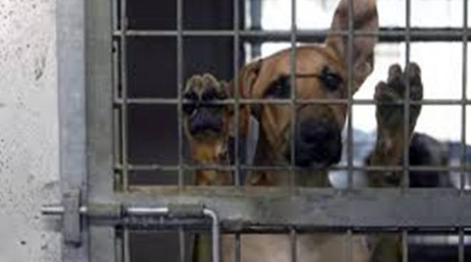 Diritti degli animali: la città in prima linea per le adozioni