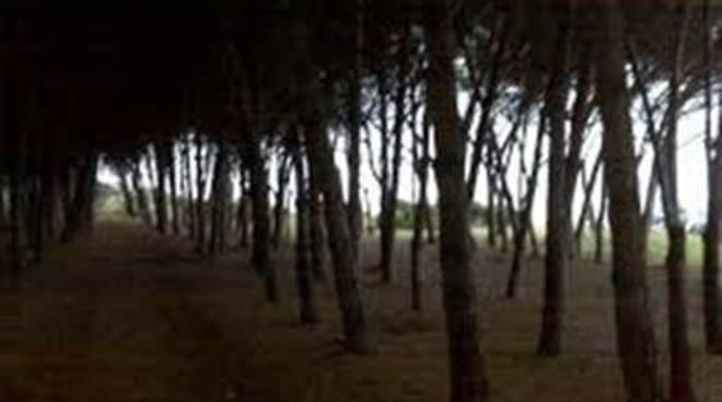 La Frasca: al via ailavori di ripiantumazione e semina delle aree