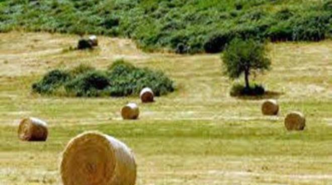 Piano dello Sviluppo Rurale: tutte le informazioni dai consulenti di Acli Terra