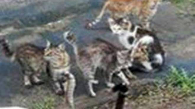 """""""300 gattini hanno fame, aiutiamoli!"""": l'appello delle volontarie"""