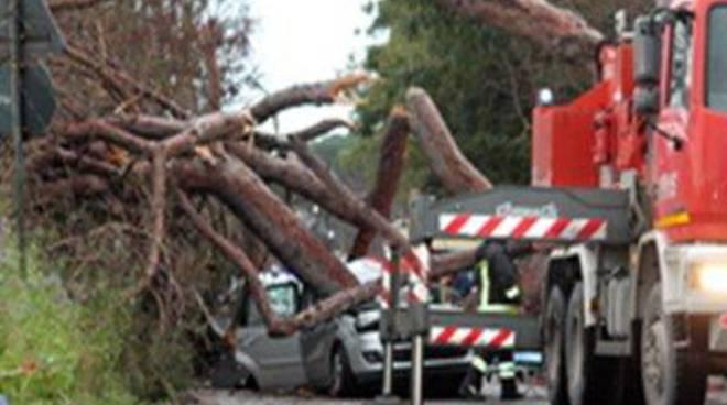 Caduta di un albero in Via Pratica di Mare: la denuncia di Fanco