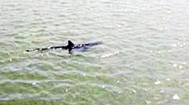 Avvistato uno squalo alla foce del Tevere