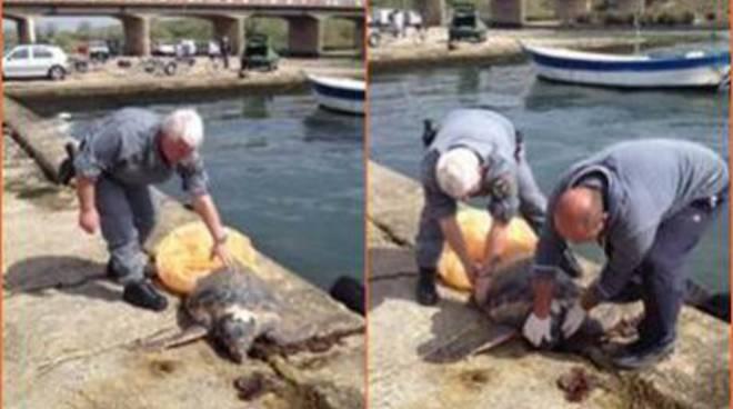 """Rinvenuto morto esemplare di tartaruga marina della specie """"Caretta caretta"""""""