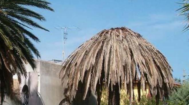 Al via l'intervento per rimuovere i 107 monconi delle palme colpite dal punteruolo rosso