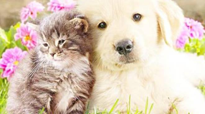 """Associazioni Animaliste: """"Nessuno ci può dare lezioni"""""""