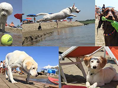 BauBeach: riapre la prima spiaggia per cani con numerose novita'