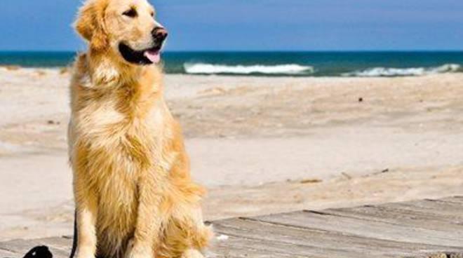 Estate 2016, le novità per i cani in spiaggia