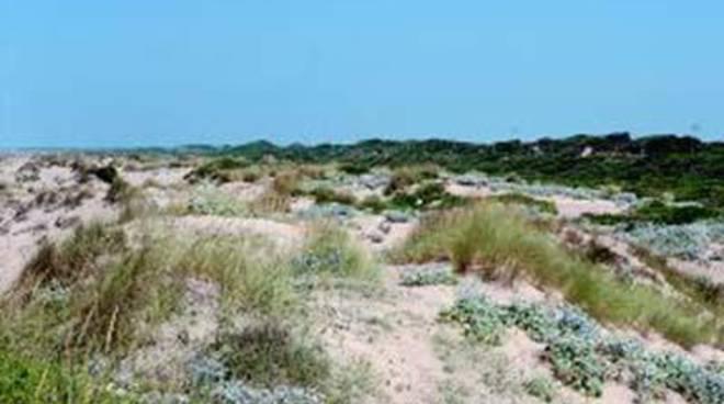 """Focene, Chiodi: """"Nuovo sopralluogo per il progetto di manutenzione e pulizia dune"""""""