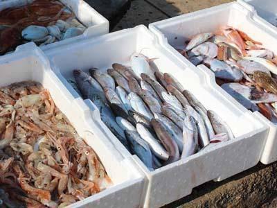 Mercato del pesce all'ex Canaga: al via i lavori