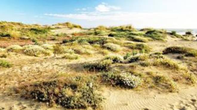 Passoscuro, là dove la sabbia dà problemi di abbondanza