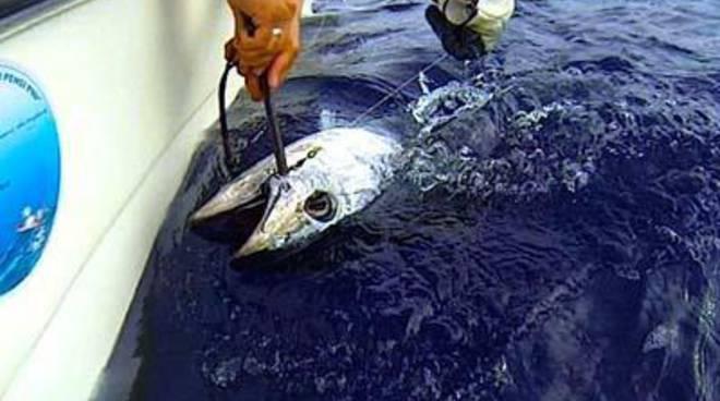 """""""The Big Red"""" III Edizione gara di pesca sportiva al Grande Tonno Rosso"""