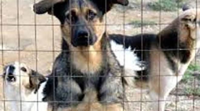 Trasferimento dell'Ufficio per i Diritti degli Animali